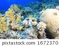 fish puffer balloonfish 1672370