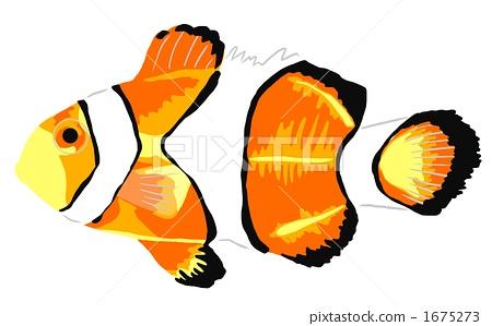 Clown anemonefish 1675273