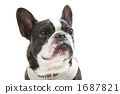 french bulldog, dog, dogs 1687821