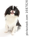 dog, dogs, studio photography 1687826