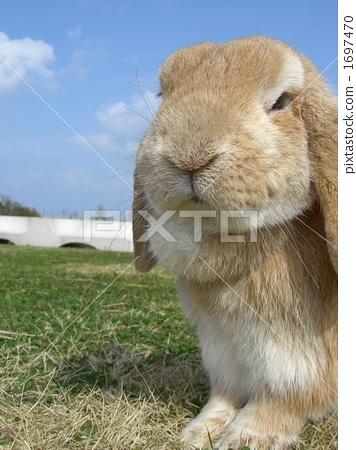 掛著兔子 1697470