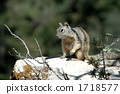 Squirre 1718577