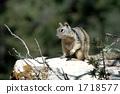 다람쥐 1718577