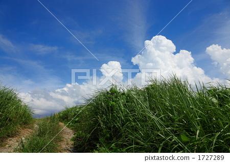 시골의 여름 방학 이미지 1727289