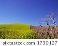 hill, farm, landscape 1730127