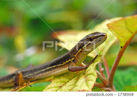 A lizard 1738968