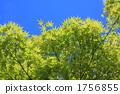 新鲜的绿色和蓝天 1756855