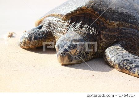 海龜 1764317