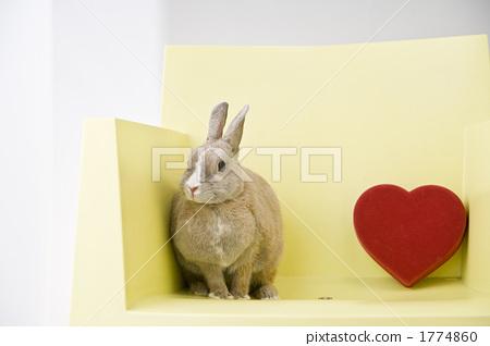 netherlands wharf, bunny, rabbit 1774860