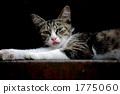 Mikane cat 1775060