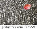 ผิวน้ำ,หญ้าแห้ง,ผักใบ 1775591