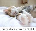 睡着 睡觉图 杂色猫 1776831