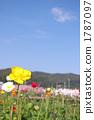 봄 꽃, 산과 들, 산야 1787097