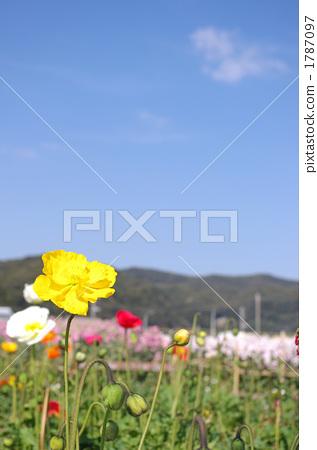 春天的花 春暖花開 山和田野 1787097
