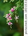 싸리 꽃 1801531