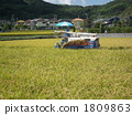 yearly event, grain, agriculture, forestry, stockbreeding, hunting and fishing 1809863
