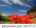 꽃밭, 꽃, 식물 1817717