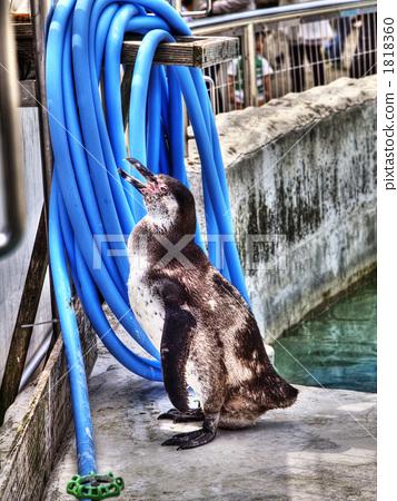 바다 동물, 해양 동물, 히가시야마도부츠엔 1818360