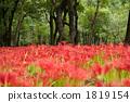 ดอกไม้ป่า,ทุ่งดอกไม้,ไม้ 1819154