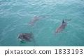 海洋动物 海豚 海洋和河流哺乳动物 1833193