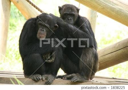 Stock Photo: animals, groom, grooming