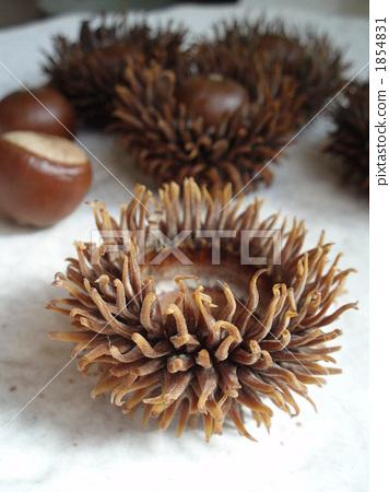acorn, berry, fruit 1854831