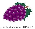 矢量图 葡萄藤 葡萄 1859871