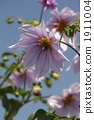꽃잎, 식물, 꽃 1911004