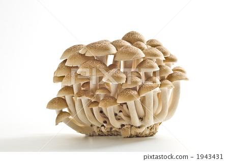 만가닥버섯, 해송이버섯, 백만송이버섯 1943431