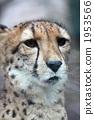 다마 동물공원, 타마 동물공원, 하나 1953566