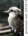 다마 동물공원, 타마 동물공원, 물총새 1953573
