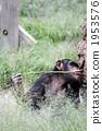 육상동물, 동물, 침팬지 1953576