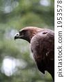 다마 동물공원, 타마 동물공원, 독수리 1953578