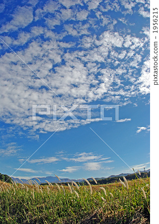 Scales of clouds and white ears of Chigaya 1956215