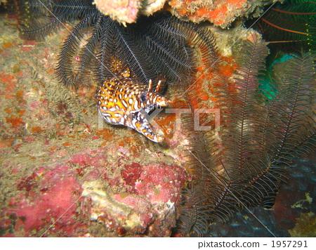 海鱔 魚 鹹水魚 1957291