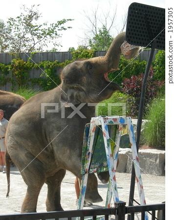 코끼리 덩크 1957305