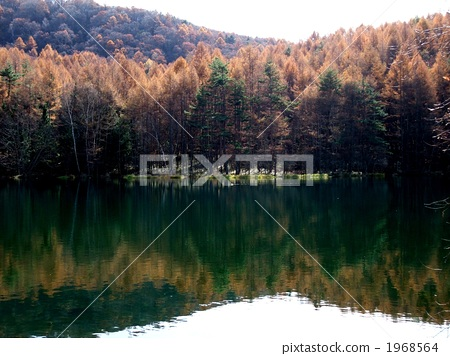 The shooting pond of autumn leaves 1968564