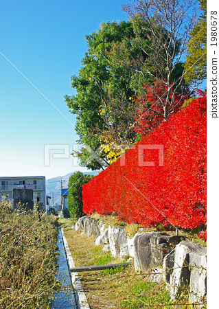 Reddened hedge of Doudendzi 1980678
