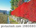 Reddened hedge of Doudendzi 1980680