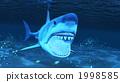 海洋動物 鯊魚 魚 1998585