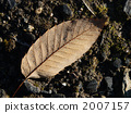 dead leaves, foliage, leaf 2007157