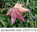 sweetgum, liquidambar styraciflua, dead leaf 2007170
