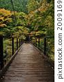 吊桥 悬索桥 枫树 2009169