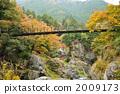 峡谷 山谷 枫树 2009173