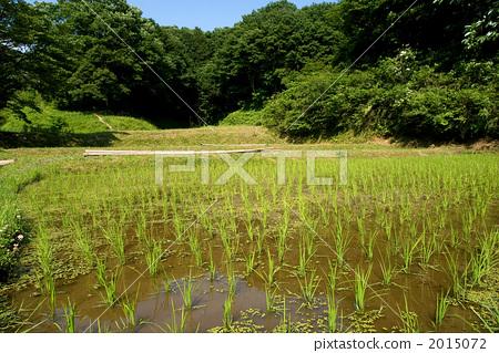 Sanae in the satoyama field 2015072