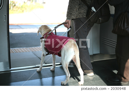 Guide dog 2030948