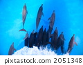 海豚要打保龄球 2051348