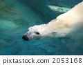 Polar bears 2053168