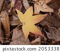 sweetgum, falling leafe, leaves 2053338
