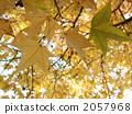 深秋 晚秋 著色 2057968